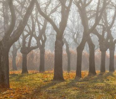 Obstwiese im Nebel